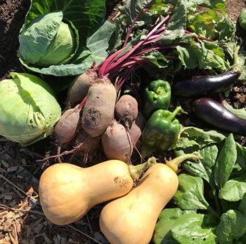 seasonal veg save money and the planet